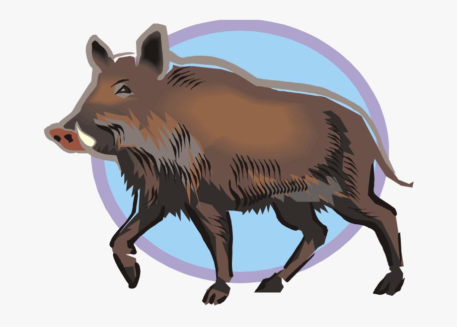 Hog Clipart Male Pig.