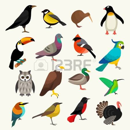 Wild Pigeon Images & Stock Pictures. Royalty Free Wild Pigeon.