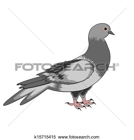 Clipart of A pigeon on a white background k15715415.