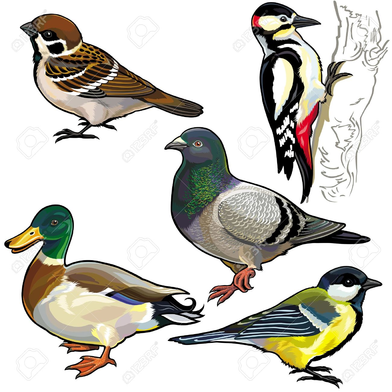 10,938 Pigeon Stock Vector Illustration And Royalty Free Pigeon.
