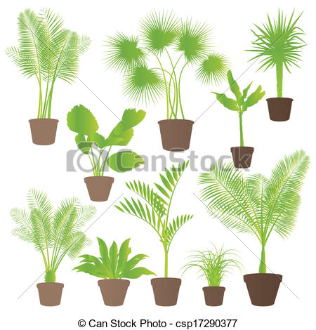 Vectors Illustration of Exotic jungle bushes grass, reed, palm.