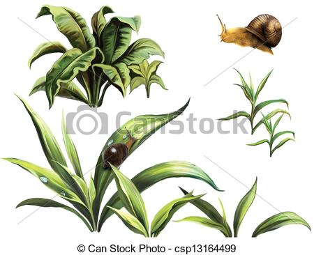 Stock Illustration of Wild plants and snails, isolated realistic.