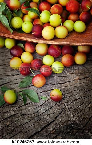 Picture of Fresh wild plum k10246267.