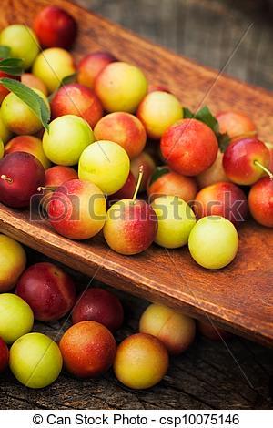 Stock Photo of Fresh wild plum.
