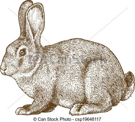 Wild rabbit Clipart Vector Graphics. 3,743 Wild rabbit EPS clip.