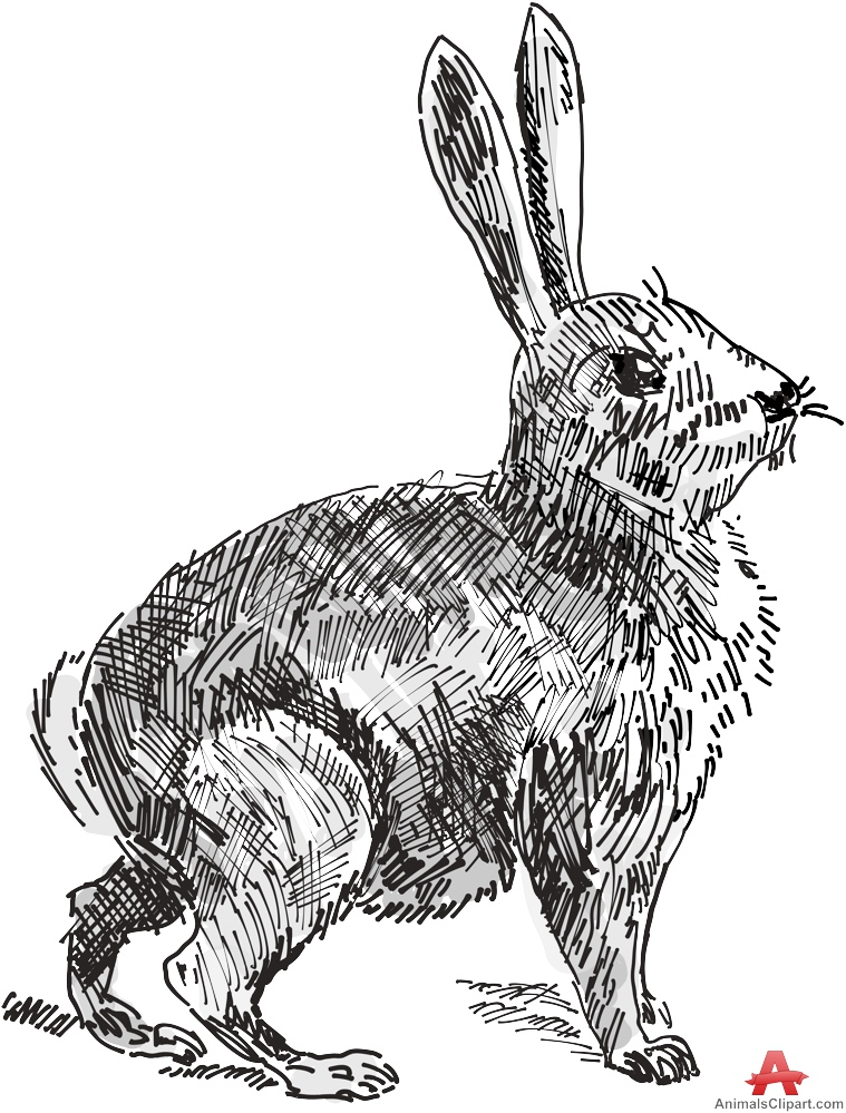 Wild Rabbit Drawing Clipart.