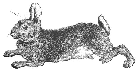 Free Rabbit Clipart, 1 page of Public Domain Clip Art.
