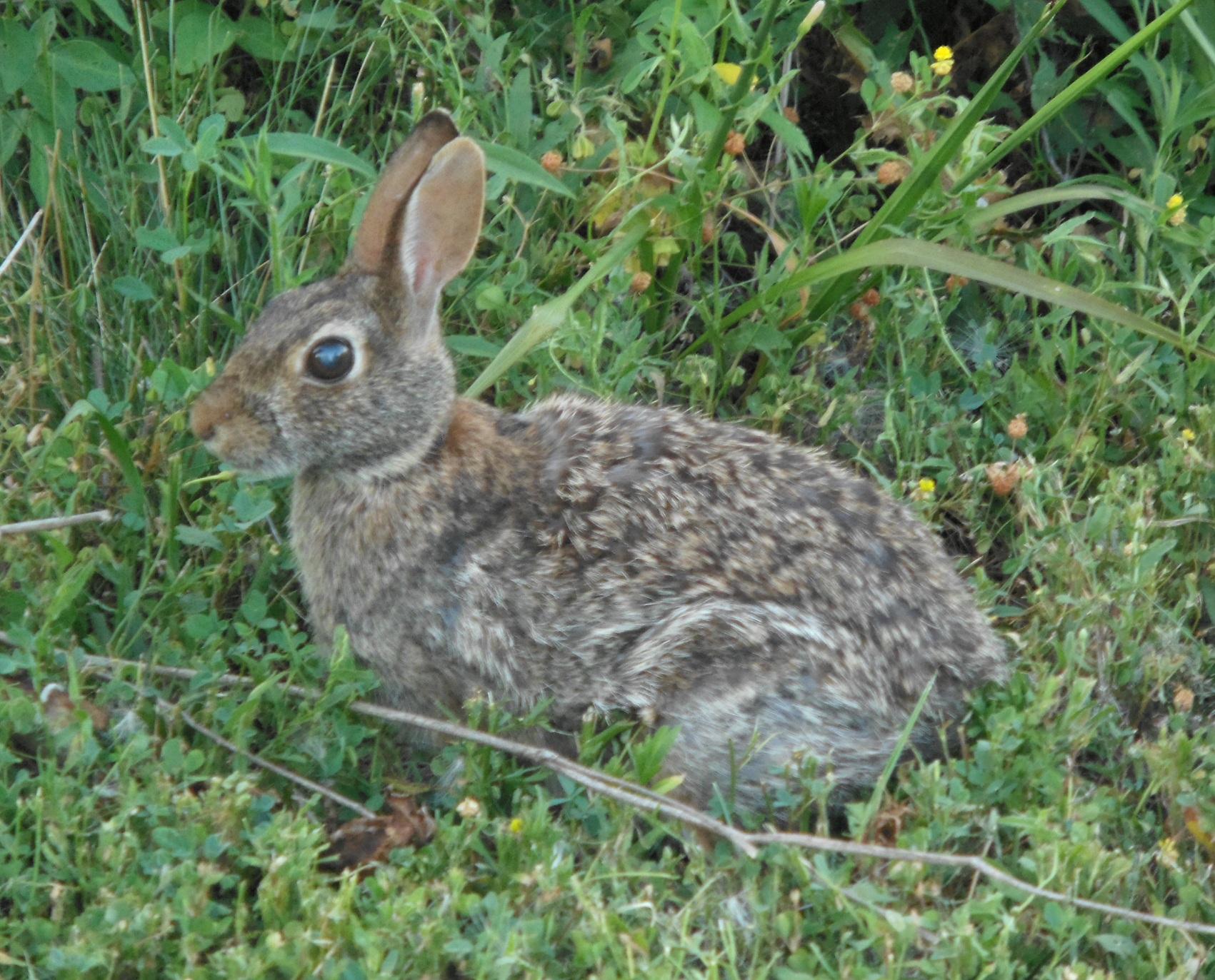 Free Nature Clipart Images: Mammals (Deer, Rabbits, Squirrels.