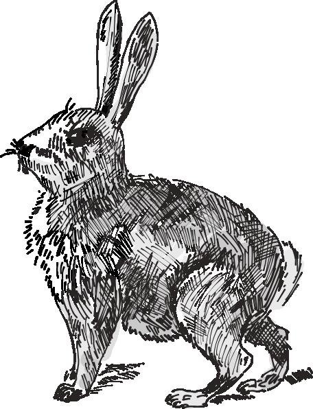 Rabbit Clip Art at Clker.com.