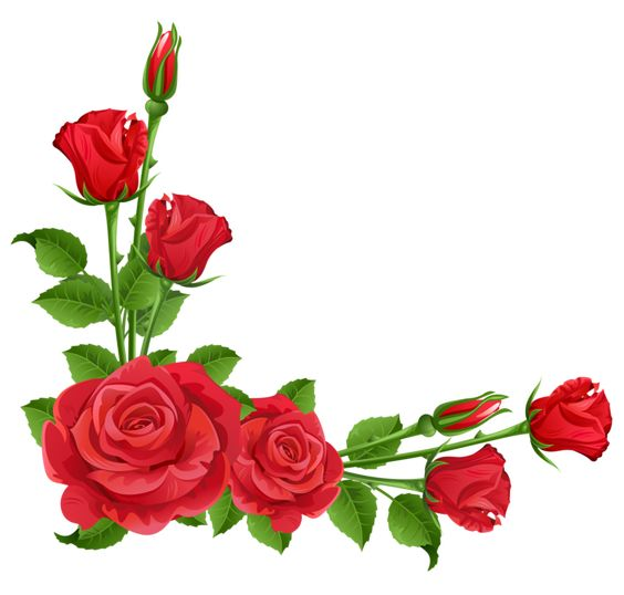 Red Roses Transparent PNG Clipart.