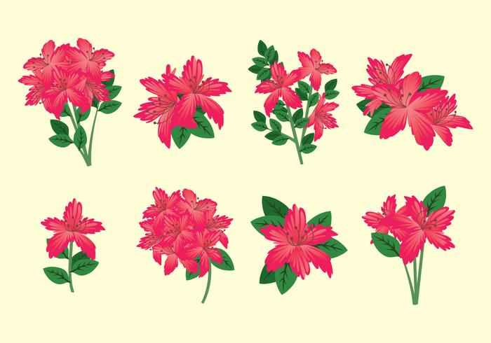 Rhododendron Vector.