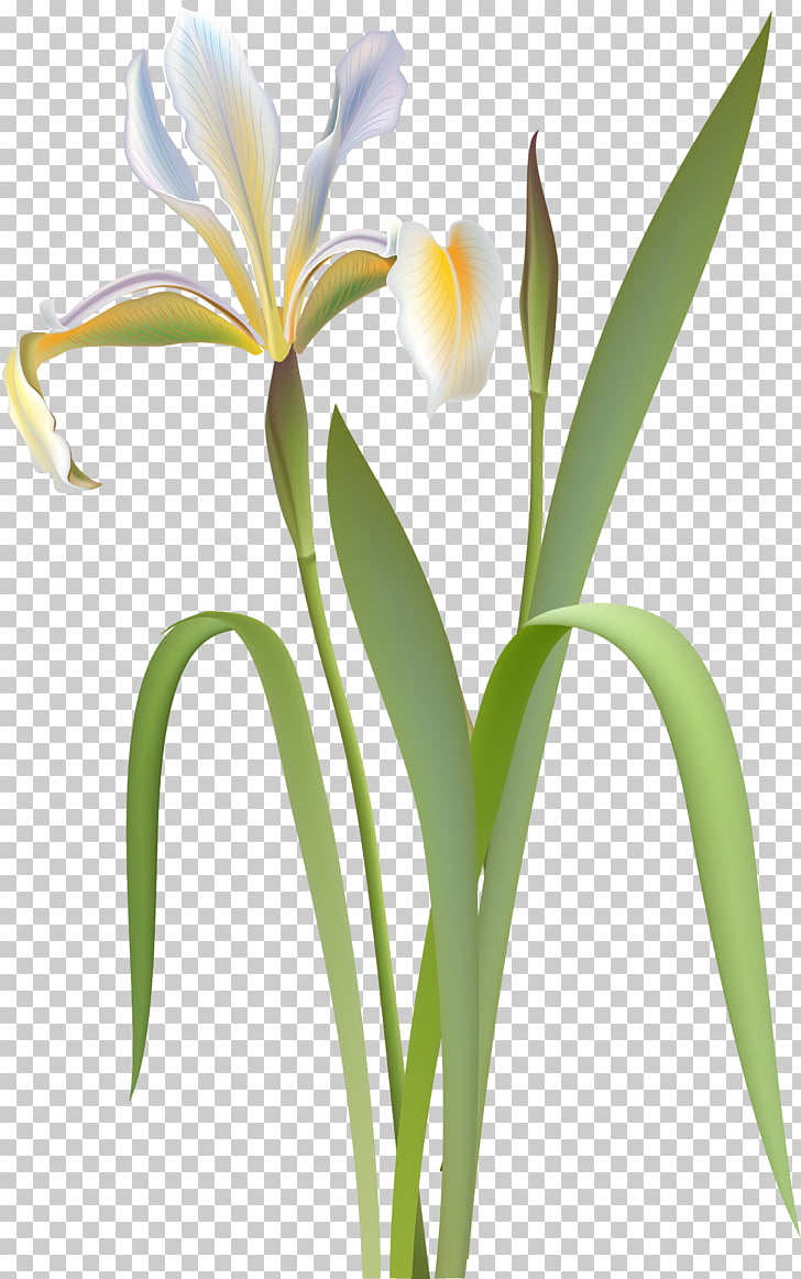 Rhododendron simsii Flower , flower PNG clipart.