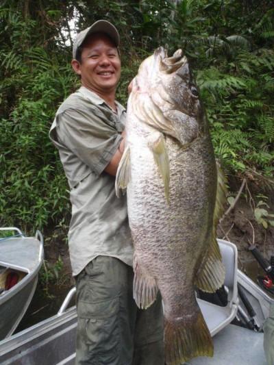 Papuan Big Black Bass and Barramundi. PNG Barramundi, PNG.