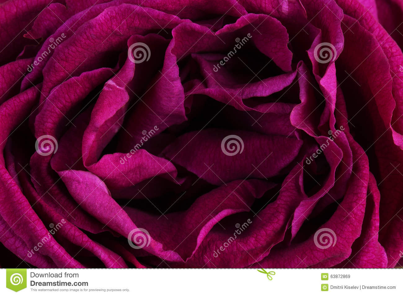 Related Keywords & Suggestions for Rose Plant With Thorns Clipart.