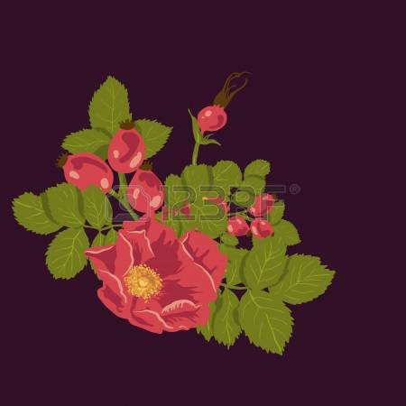 2,649 Rose Bush Stock Illustrations, Cliparts And Royalty Free.
