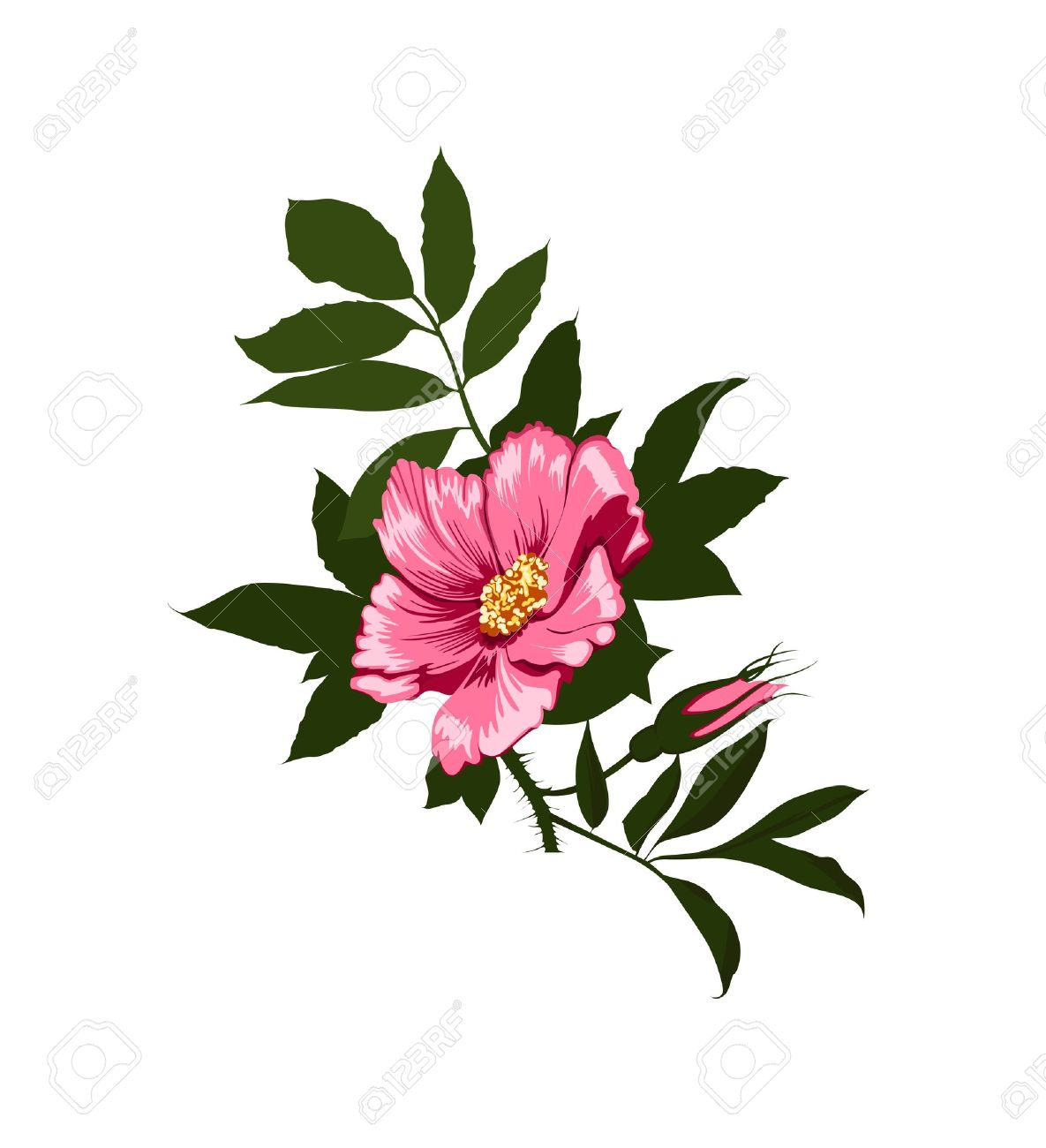 Wild Rose Bush Clipart 20 Free Cliparts Download Images