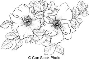 Wild rose Illustrations and Stock Art. 2,256 Wild rose.
