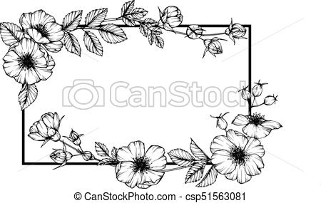 Wild rose flower frame drawing..