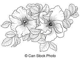 Wild rose Illustrations and Stock Art. 2,256 Wild rose.