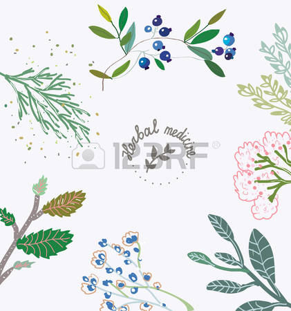 610 Sage Leaves Cliparts, Stock Vector And Royalty Free Sage.