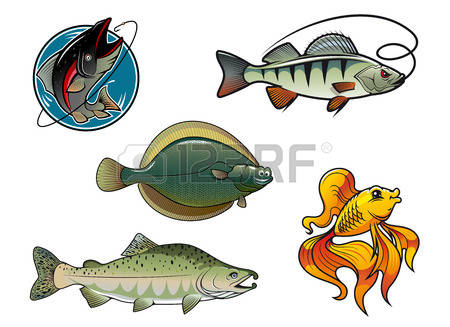 2,090 Wild Salmon Stock Illustrations, Cliparts And Royalty Free.