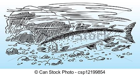 Clipart Vector of Salmon in the wild, river bottom. Vector.