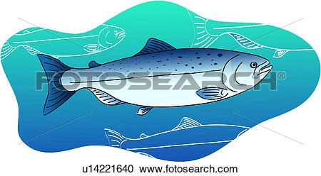 Clipart of fish, salmon, vertebrate, sea, fishes, wild animal.