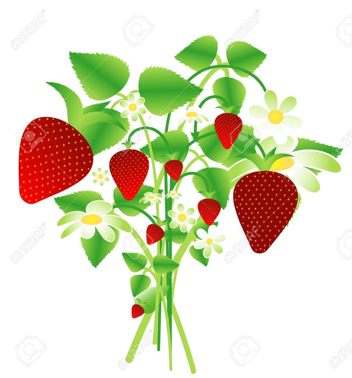 Bouquet Of Wild Strawberries Royalty Free Cliparts, Vectors, And.