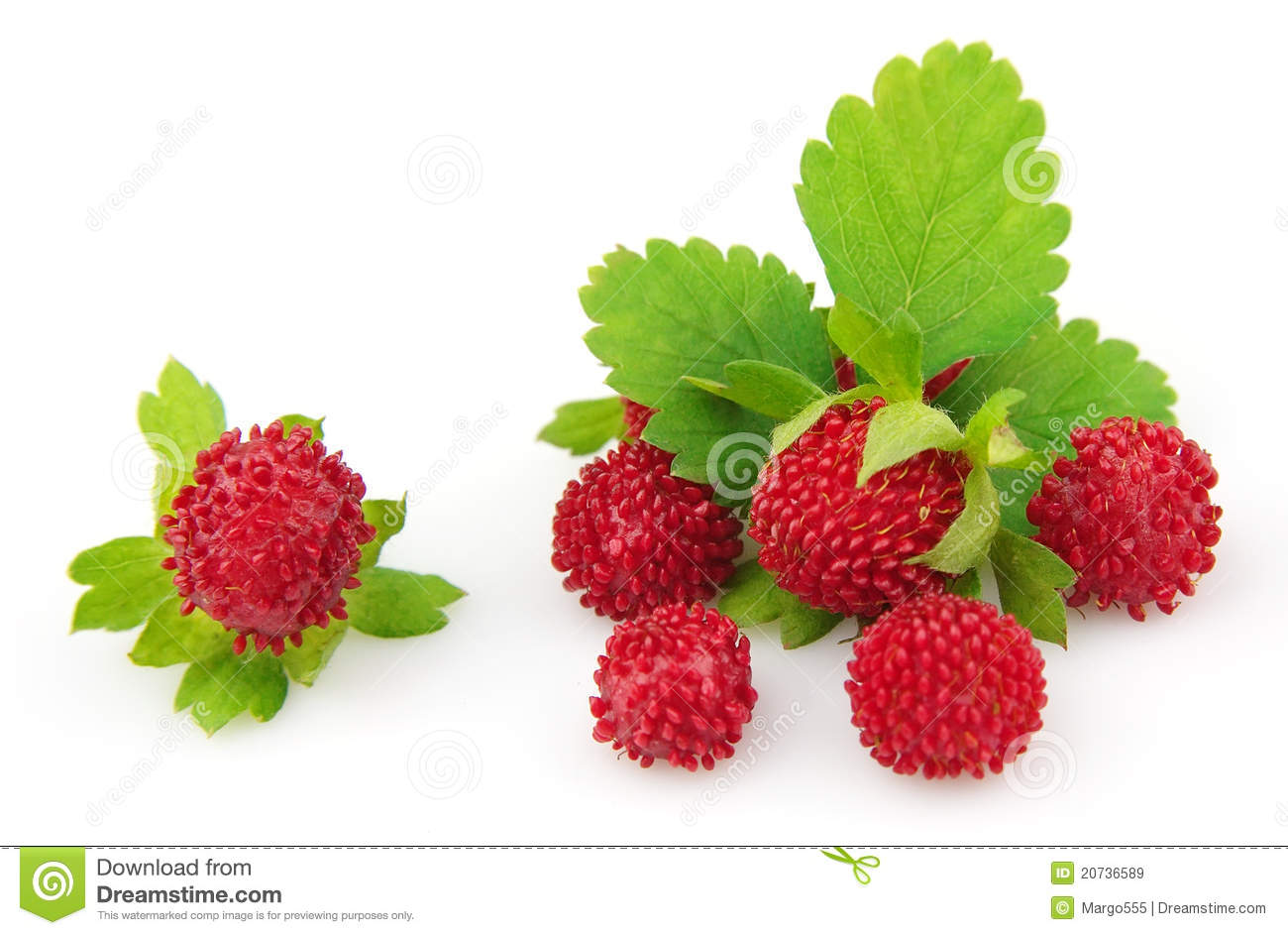 Wood Wild Strawberry Stock Photography.