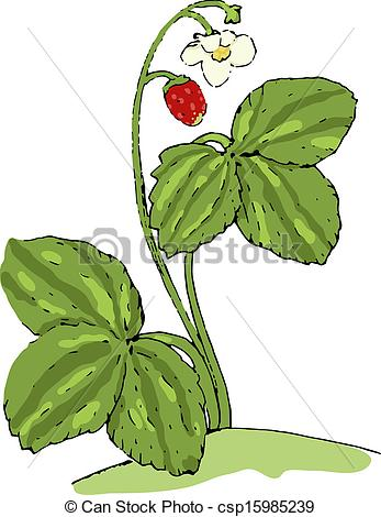 Wild strawberry Illustrations and Stock Art. 611 Wild strawberry.