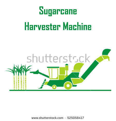 Sugarcane Plant Stock Photos, Royalty.