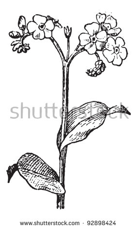 Botanical Sketch Stock Photos, Royalty.