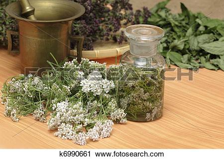 Stock Photography of Medicinal herbs.