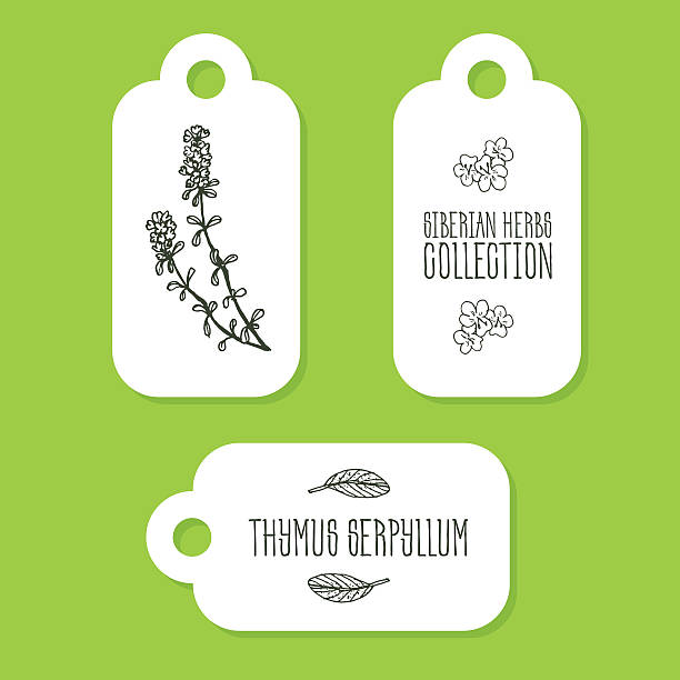 Wild Thyme Clip Art, Vector Images & Illustrations.