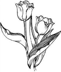 Free Tulip Clipart.