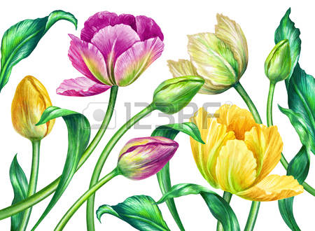 Wild Tulip Images & Stock Pictures. Royalty Free Wild Tulip Photos.
