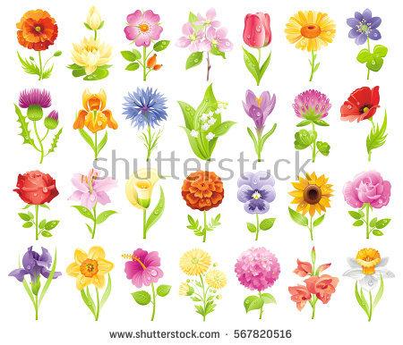 Tulip Stock Vectors, Images & Vector Art.