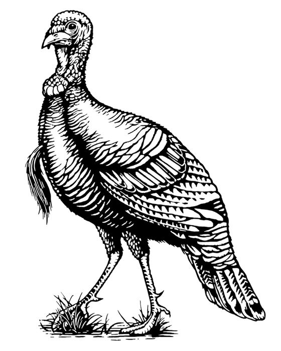 Wild Turkey Bourbon Illustrated by Steven Noble on Behance.
