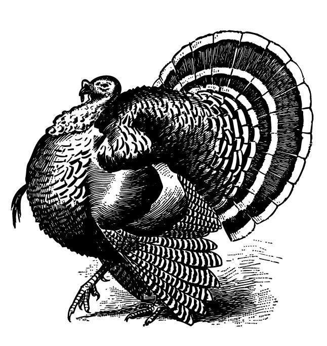 turkey engraving.