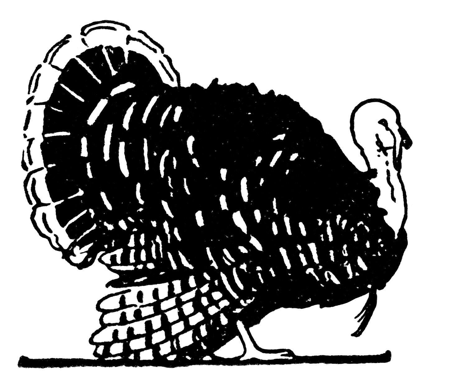 Free Vintage Turkey Clip Art (black and white version).