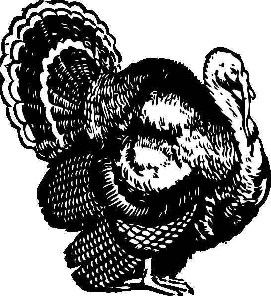 Turkey clip art Free Vector / 4Vector.
