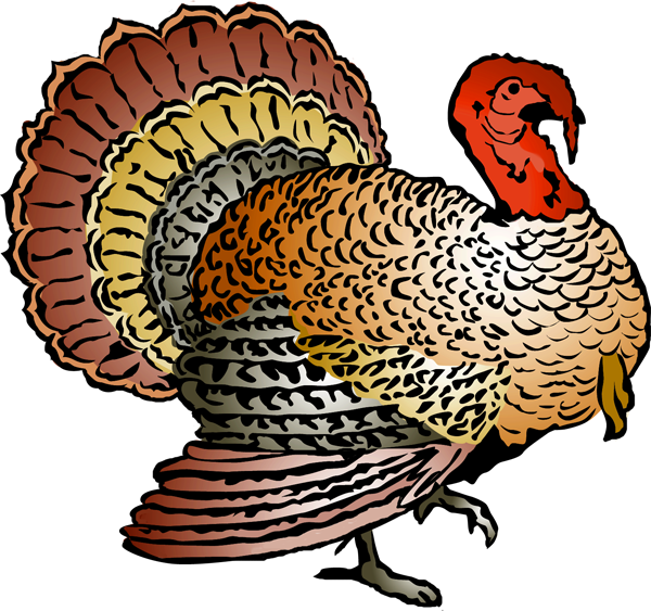 Wild Turkey Clipart.