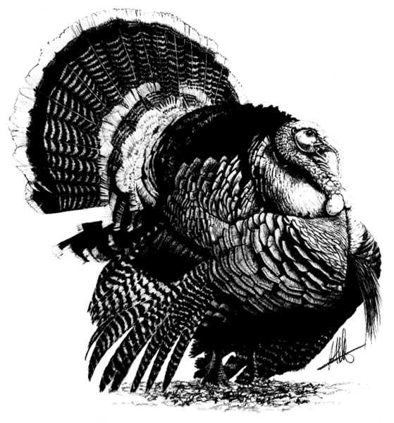 Download Free png Wild Turkey Clipart Black And White.