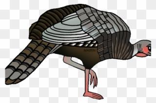 Free PNG Wild Turkey Clip Art Download.
