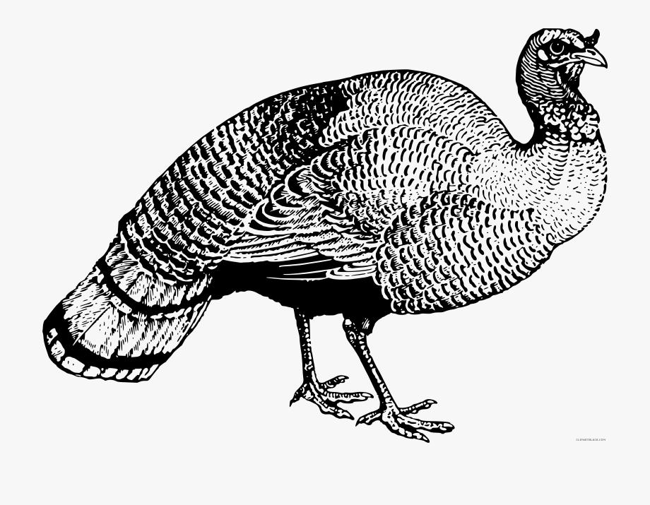 Black And White Turkey Clipart.