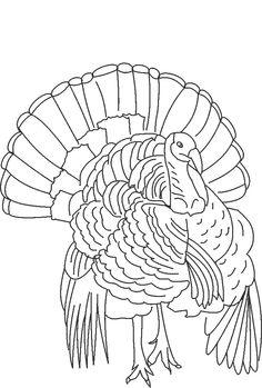 13466 Turkey free clipart.