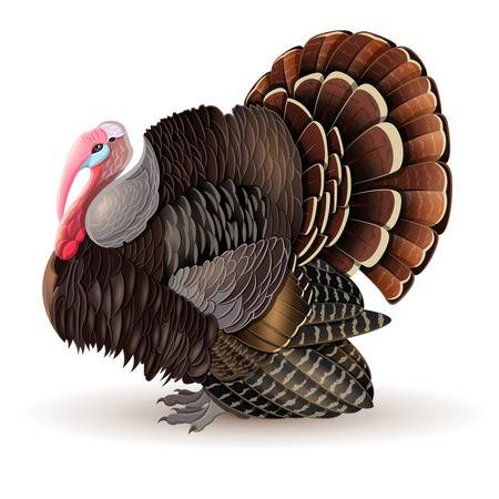 Wild turkey clipart 2 » Clipart Station.