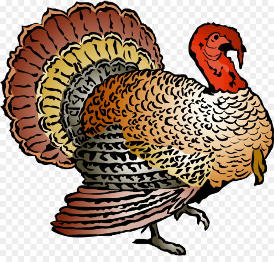 Turkey Cartoon clipart.