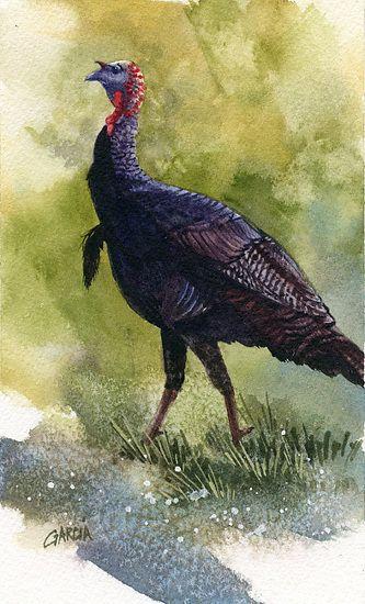 Wild Turkey by Joe Garcia Watercolor.