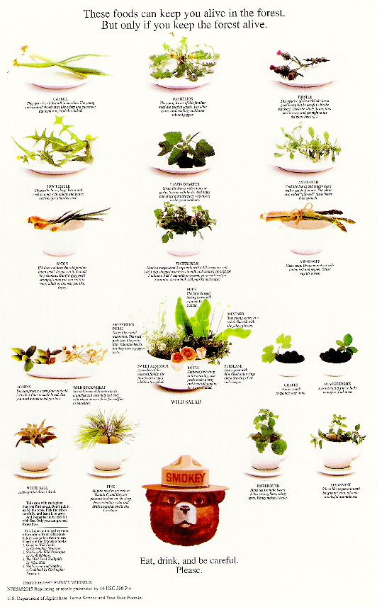 Edible wild plants gif clipart.